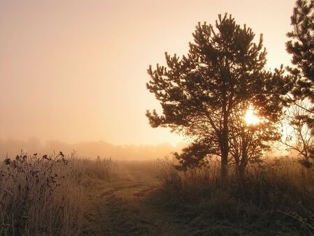 Foggy morning. Upon the end dawn. Easy frost. The Moscow area. photo