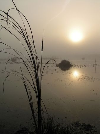 Foggy morning on Tulchinskom lake. The Moscow area.   Stock Photo - 824775