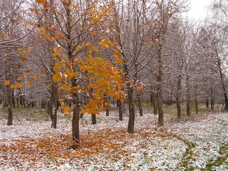 late fall: The first snow. A late autumn in city park.
