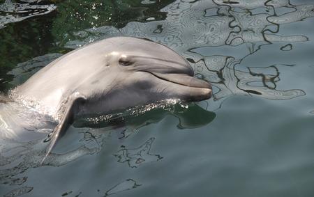 sympathetic: Dolphin in the sea. Russia, Black Sea. Stock Photo