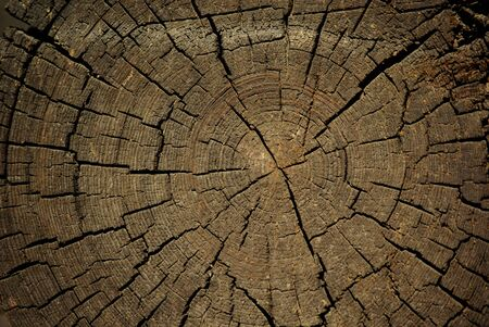 Texture of a cut of a large tree with traces of saw and cracks. Growth rings on an old trunk. Wood circle background