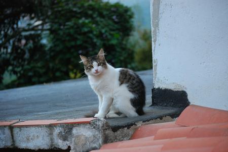 negoro: Cat rest