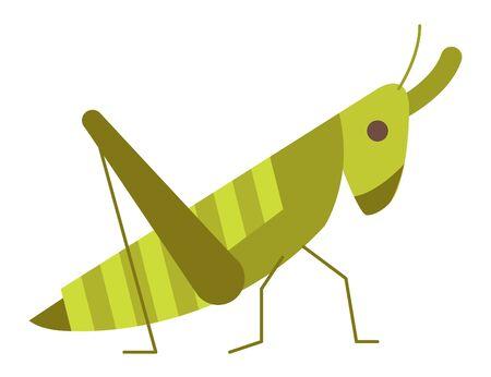 grasshopper animal vector illustration icon flat design