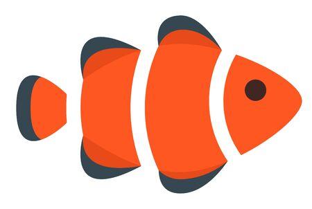 clown fish vector illustration