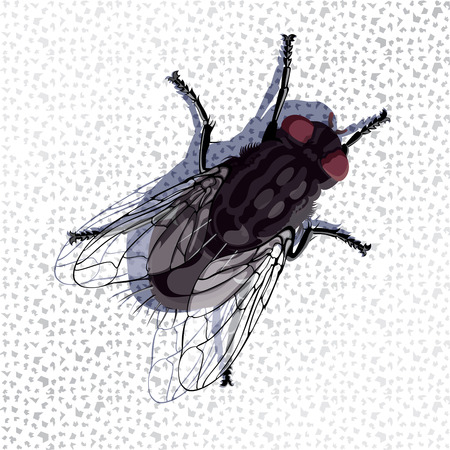 annoyance: Common fly standing on the wall draw