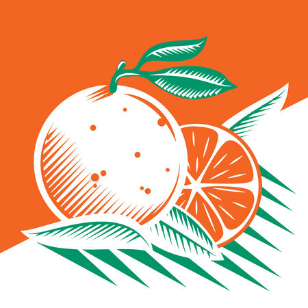 Oranges and leafs draw Çizim