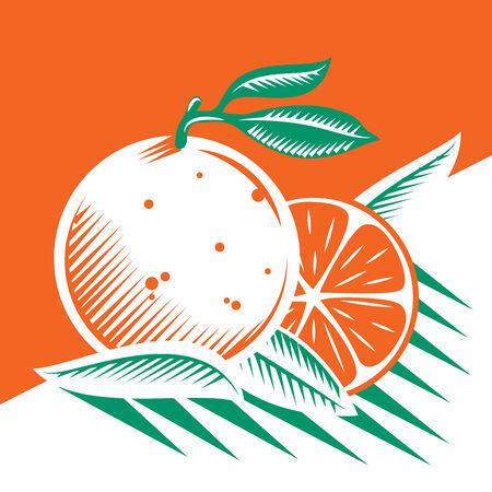 foodstuffs: Oranges and leafs draw Illustration