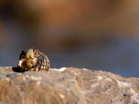 Hermit crab on the seashore
