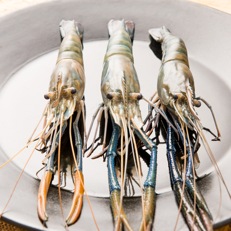 rosenbergii: Giant malaysian prawn on plate (Macrobrachium dacqueti)