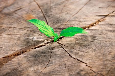 nouvel arbre qui pousse sur le bois mort