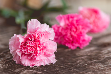 day valentine: Pink carnations on woodden background Stock Photo