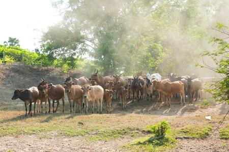 vaca marrón en el campo