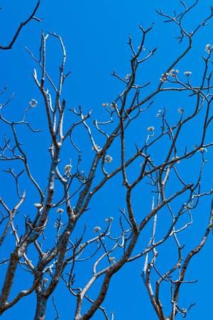 fall trees: trees on blue sky background