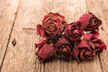 sapless: Dry bud of a red rose flower on wood background Stock Photo