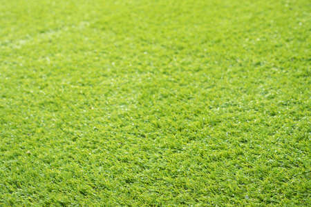 sports field: artificial green grass