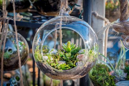 Cactus terrarium in the market Stock fotó