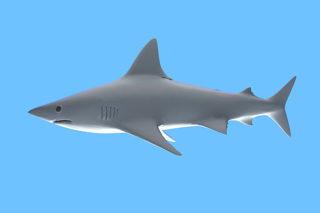 White shark in blue background, 3d rendering