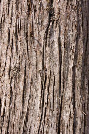 Corteccia di un albero  Archivio Fotografico
