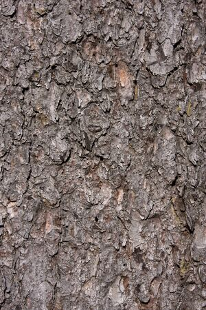 Bark of a tree, details visible. Stock Photo