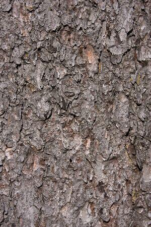 Corteccia di un albero, dettagli visibili. Archivio Fotografico
