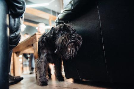 black terrier next to a man Stok Fotoğraf