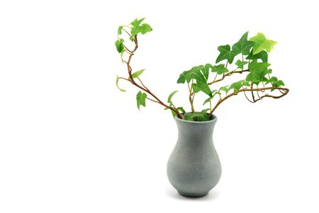 creepers: vase with ivy isolated on white Stock Photo