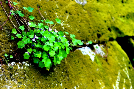 Plants emerging from pavements Stok Fotoğraf - 102187033