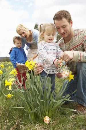 easter egg hunt: Family On Easter Egg Hunt In Daffodil Field