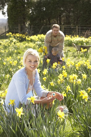 egg hunt: Woman Hiding Decorated Easter Eggs For Hunt Amongst Daffodils Stock Photo