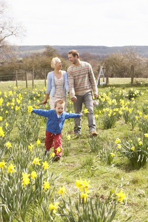 and four of the year: Young Family Walking Amongst Spring Daffodils
