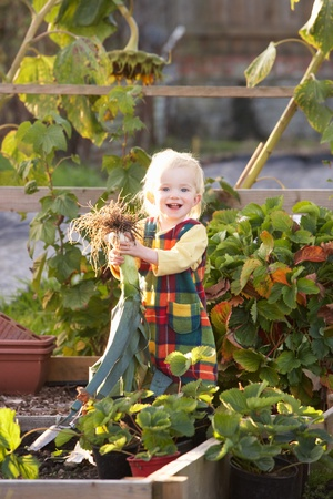 Young child on allotment photo