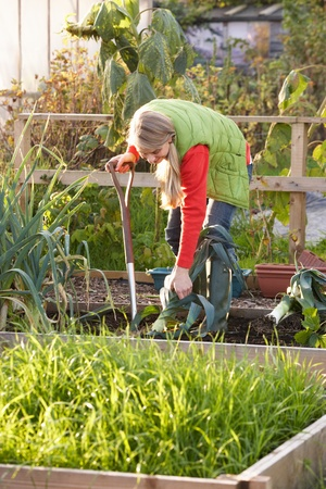 Woman working on allotment photo