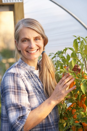 mid age: Woman working in greenhouse Stock Photo
