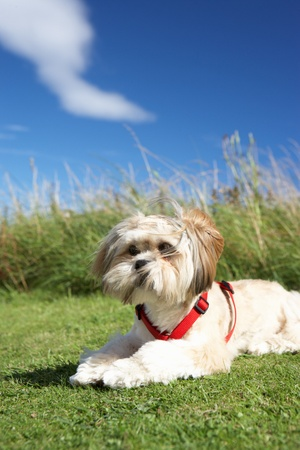 Small dog sitting on grass photo