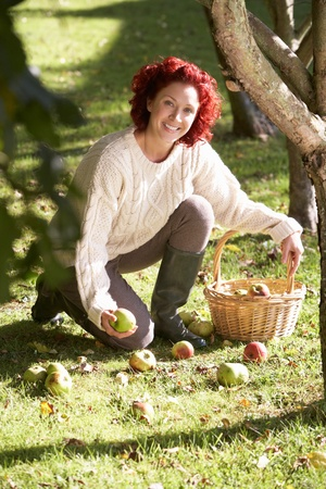Woman collecting apples off the ground photo