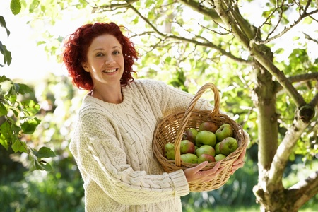 Woman picking apples in garden Stock Photo - 11246824