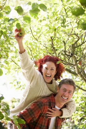 Couple picking apples off tree Stock Photo