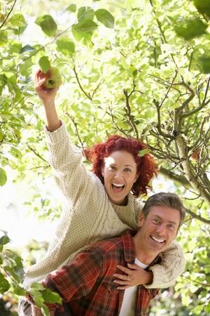 Couple picking apples off tree Stockfoto