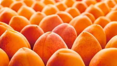 recedes: Background of rows of ripe orange apricot fruit.