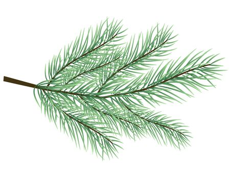 conifers: fur-tree branch vector Illustration
