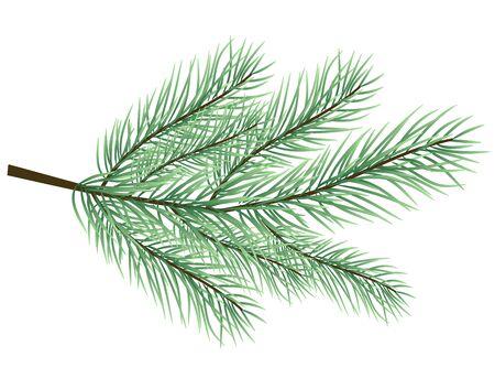 furtree: fur-tree branch vector Illustration