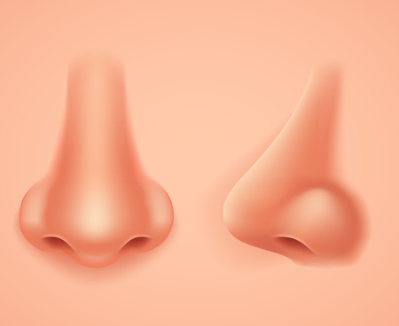Front Profile Human Nose Realistic Background Isolated 3d Design Vector Illustration