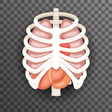 Rib Cage pulmones corazón hígado estómago estómago Iinternal órganos iconos y símbolos dibujos animados retro diseño Vector Illustration