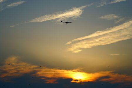 Sky & bird