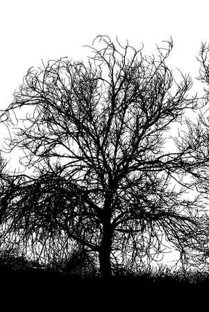 Dead tree in BW