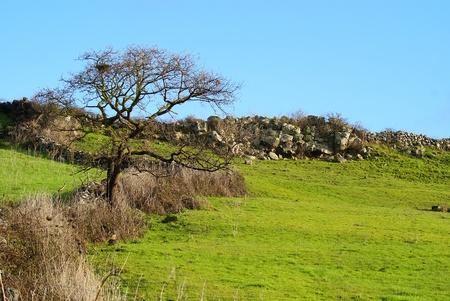 Toter Baum auf Rasen