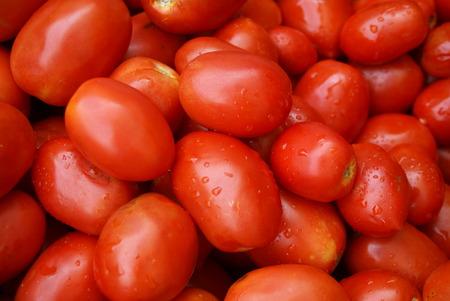 solanaceae: Tomatoes