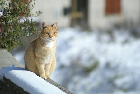 Karda Kedi