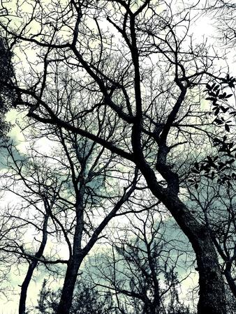 Kuru ağaçlar