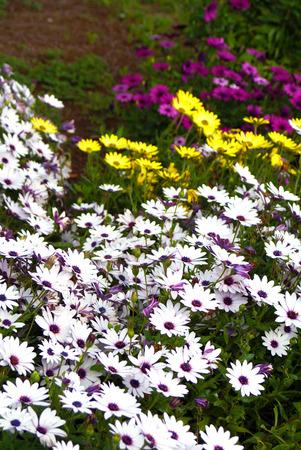 B�sche von bunten Blumen